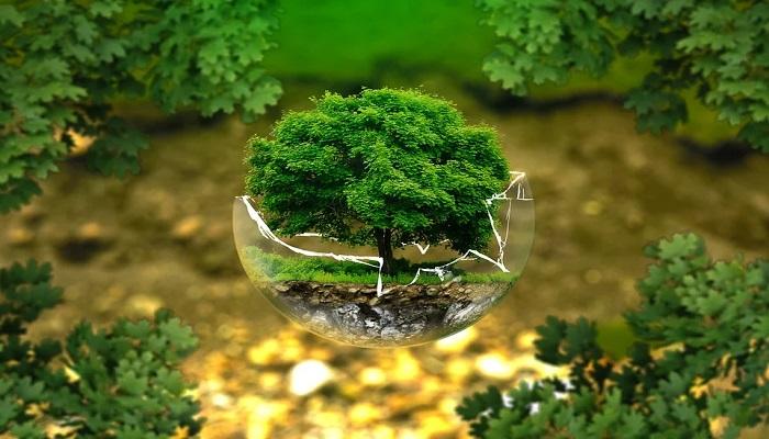 Aprende a cuidar al medio ambiente con estos consejos ecológicos